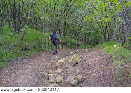 Man With Backpack And Stick Walking In The Woods. Natural Landscape. Trekking/hiking Concept