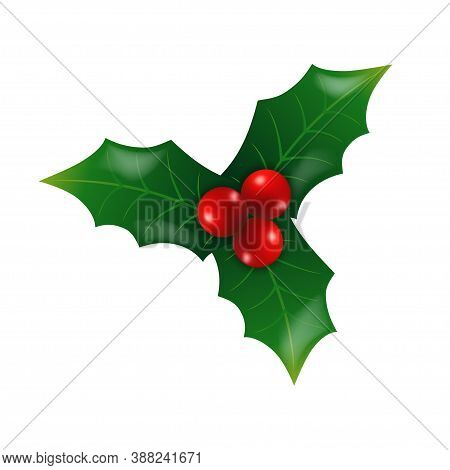 Christmas Holly Or Ilex With Red Berries. Traditional Christmas Holly Berry Design Element. Isolated