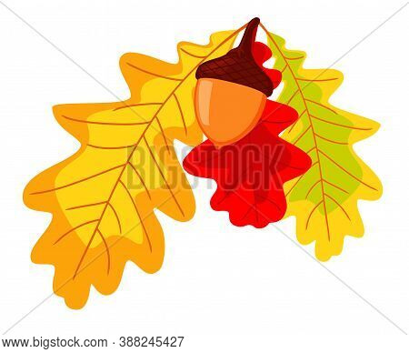 Colorful Autumn Oak Leaves And Acorn. Thanksgiving Foliage Decor. Fall Themed Vector Illustration Fo
