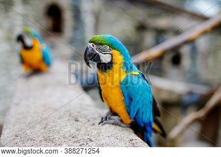 Big Ara Parrots In Wildlife Park. Trusting Friendly Birds In A Zoo