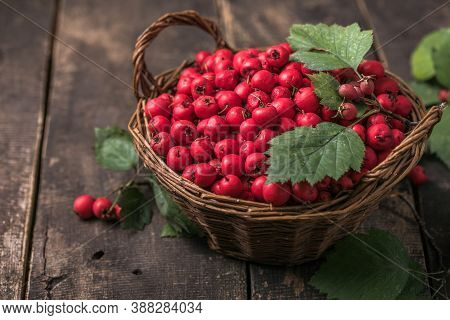 Red Berries Of Fresh Hawthorn In The Basket Standing On A Wooden Table. Copy Space.fresh Hawthorn In