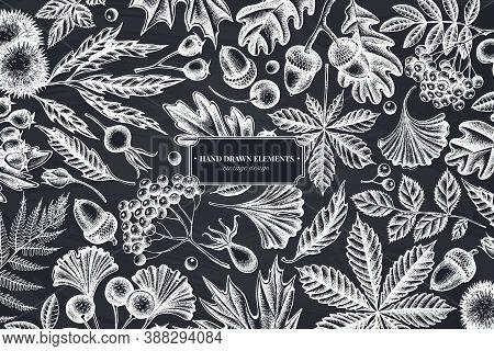 Monochrome Design With Chalk Fern, Dog Rose, Rowan, Ginkgo, Maple, Oak, Horse Chestnut, Chestnut Haw