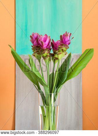 Purple Curcuma Siam Tulip Flowers In Transparent Vase On Cantaloupe Orange Background With Turquoise