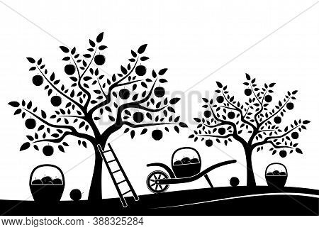 Vector Wheel Barrow And Baskets Of Apples In Apple Tree Orchard Isolated On White Background