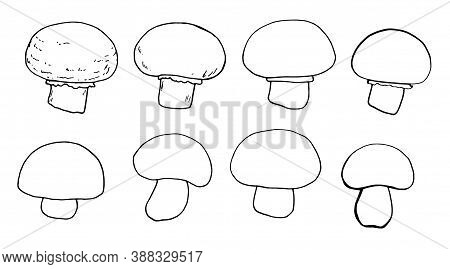 Vector Set With Doodles Mushrooms And Champignons Isolated On A White Background . Edible Mushroom M