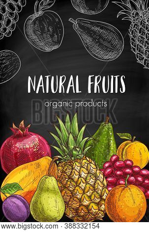 Natural Fruits Chalkboard Sketch Banner. Pomegranate, Pineapple And Plum, Orange, Peach Or Nectarine