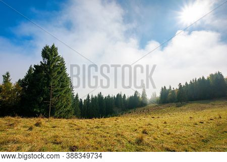 Cold Autumn Morning. Foggy Weather Scenery. Spruce Forest On The Grassy Meadow. Nature Magic Concept