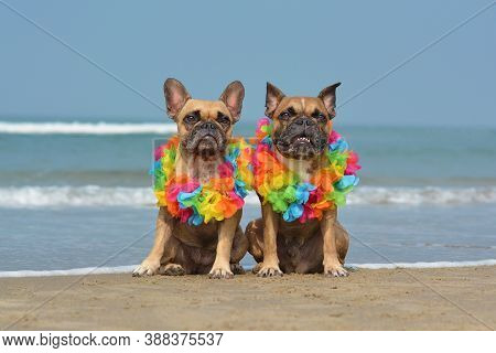 Two Cute French Bulldog Dogs Sittingat Beach In Front Of Ocean Wearing Colorful Tropical Flower Garl