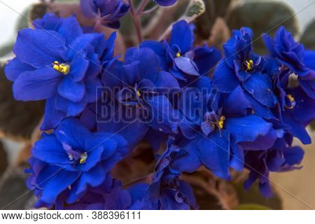 Close Up Of The Violets Flowers With Green Leaves