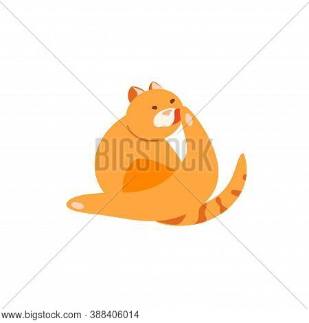 Red Plump Cat Washing Itself Vector Character