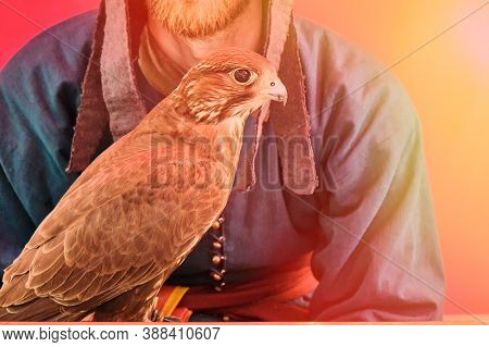 A Bird Of Prey Sits On The Glove Of A Man With A Beard. Falcon Hunting In Retro Style On A Red Backg