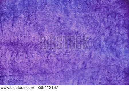 Blue Wool Sheep Texture, Fur Close-up. Background Sheepskin Violet. Texture Of Purple Colored Sheep