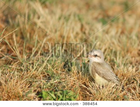Bird In Grass