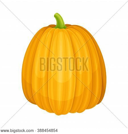 Yellow Pumpkin With Ribbed Skin As Agricultural Crop Vector Illustration