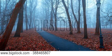Fall landscape, panoramic fall landscape view. Fall in the city November park. Foggy fall park alley in cold tones