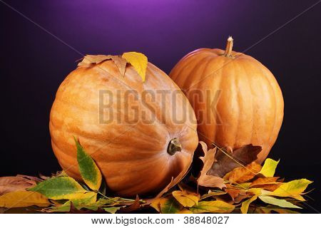 Two ripe orange pumpkins with yellow autumn leaves on purple background