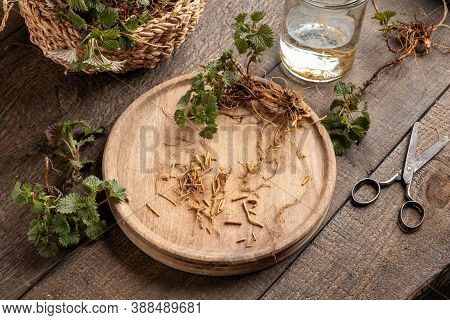 Cutting Up Young Nettle Roots - Ingredient To Prepare A Homemade Herbal Tincture