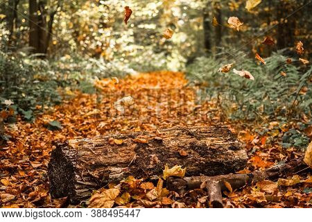Amazing Forest Landscape With Fallen Tree Trunk And Trees Standing In Sunlight. Sun Shines Through T