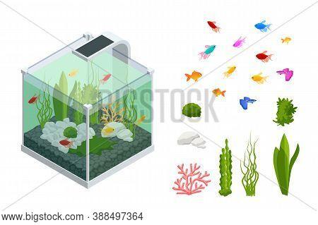 Isometric Goldfish In The Freshwater Aquarium And Set Of Aquarium Underwater Elements, Fish, Corals,