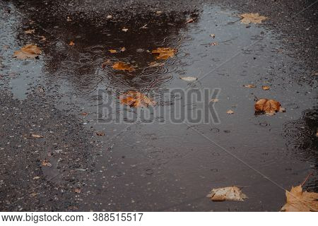 A Fallen Yellow, Orange Maple Leaf In A Puddle On . Raindrops, Circles On The Water. Autumn. Backgro