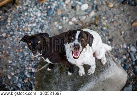 Hound Dog and Friend Smiling Together