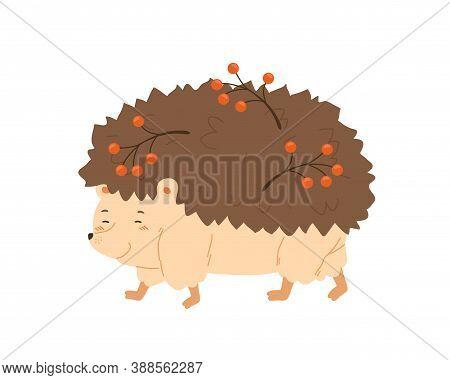 Cute Hedgehog Walking And Carry Rowan Branches. Friendly Sweet Autumn Urchin. Flat Vector Cartoon Il