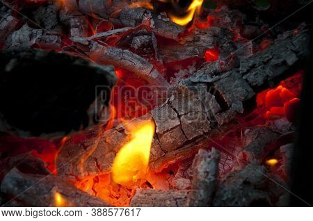 Bonfire Closeup. Fire And Firewood Turned Into Coal Ash. Burning Tree Branches Wooden Logs. Picnic O