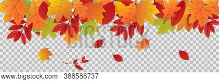 Autumn Leaves On Transparent Background. Fall Illustration With Colorful Leaf Banner. Collection Of