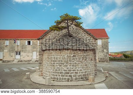 Pine Tree Growing On The Roof Of Chapel In Nerezisca Place, Brac Island, Croatia.
