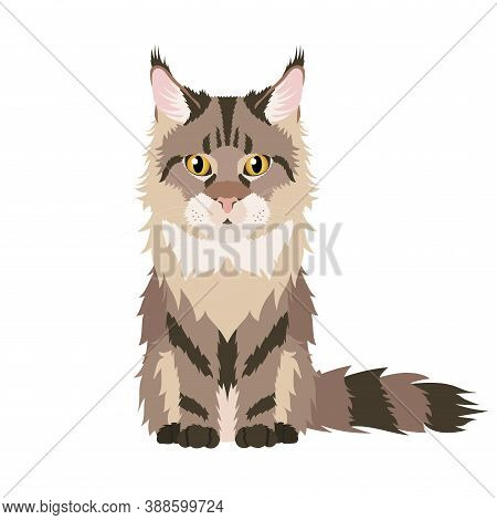 Vector Portrait Of Brown Main Coon Cat Isolated On White Background