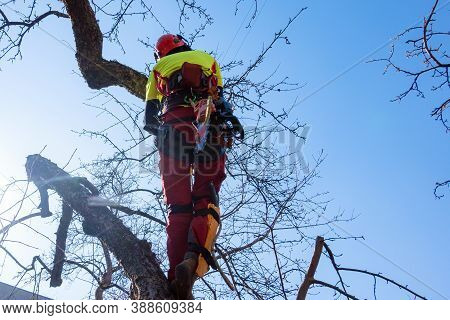 Man Pruning Tree Tops Using A Saw. Lumberjack Wearing Protection Gear And Sawing Branches After Stor