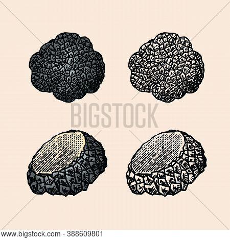 Truffles Mushrooms Set. Engraved Hand Drawn Vintage Sketch. Ingredients For Cooking Food. Woodcut St