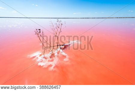 The Salty Shore Of The Laguna Salada De Torrevieja.spain. The Water Looks Pink Due To A Special Alga