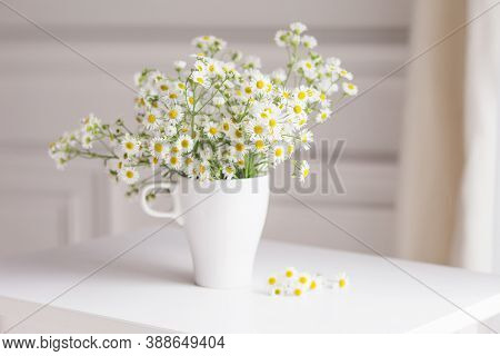 Bouquet Of Gentle Camomile In White Cup. Morning Light In The Room. Soft Home Decor,  Vase With Whit