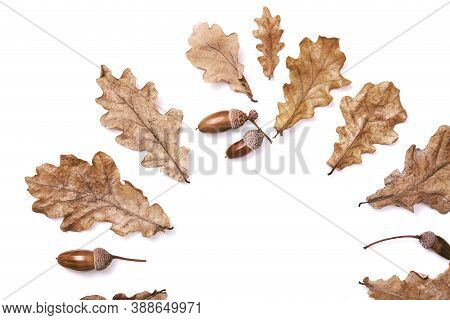 Semicircle Made From Autumn Dried Leaves, Oak Leaves And Acorns Isolated On White Background, Flat L
