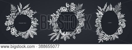 Frames With Chalk Fern, Dog Rose, Rowan, Ginkgo, Maple, Oak, Horse Chestnut Chestnut Hawthorn Stock