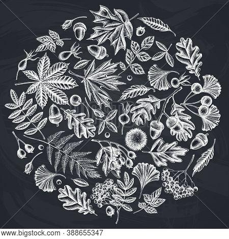 Round Design With Chalk Fern, Dog Rose, Rowan, Ginkgo, Maple, Oak, Horse Chestnut, Chestnut Hawthorn