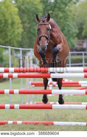 Young Purebred Horse Loose Jumping On Breeders Event