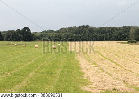 Haymaking, Cleaning And Drying Of Grass For Pets.