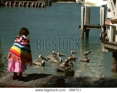 Watching Pelicans