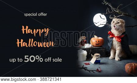 Halloween Banner. Special Offer, Discount, Sale. Cute Cat Wearing Dracula Vampire Costume, Pumpkins,
