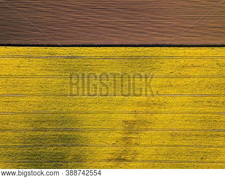 Aerial View Of Yellow Colza Rape Fields, Agriculture Concept From Drone Perspective. Horizontal Fram