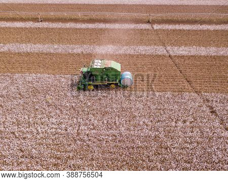 North District, Israel - October 2, 2020: Cotton Plant. Cotton Picker Working In A Large Cotton Fiel