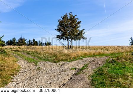 Gravel Crossroads In The Clearing With Single Tree In The Middle, Two Different Directions, Choosing