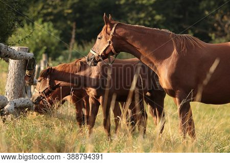 Horse stallion mare Nature colt pet foal sunrise pet sunset Nature pet animal Nature pet landscape Nature animal pet horses Nature background Nature pet meadow Nature animal pastrure Nature pet background mammal Nature dusk Nature pet Nature background.