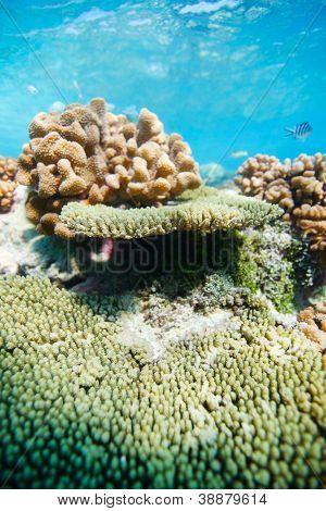 Beautiful colorful coral reef in Pacific ocean