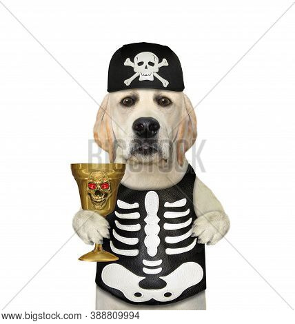 A Dog In A Skeleton Costume Drinks From A Golden Goblet For Halloween. White Background. Isolated.