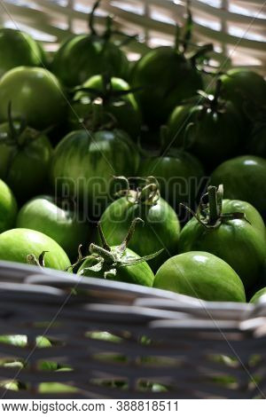 A Row Of Tomatoes On Display. Unripe Tomatoes In The Basket. High Quality Photo