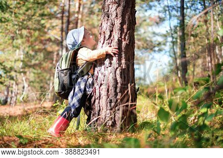 Small kid in yellow sweater hugs a pine tree in autumn forest. Childhood with nature loving concept