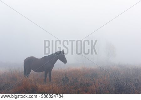 Brown horse in foggy meadow in mountains valley. Landscape photography